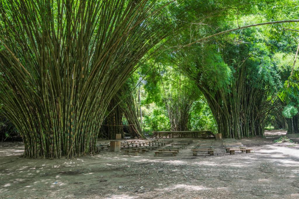 Tropical Bamboo Garden