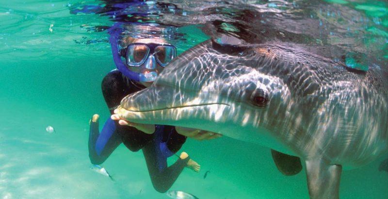 Roatan AKR dolphin snorkel