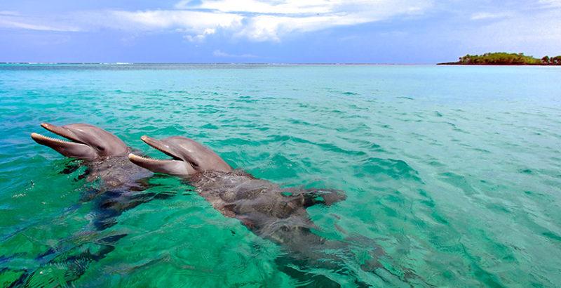 Roatan-dolphins