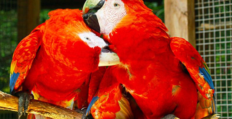 Macaw Bird park