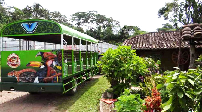 Coffee-Tour Finca Santa Isabel