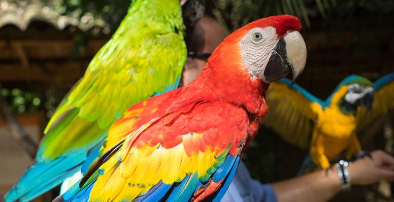 Macaw-Mountain-Copan-Ruinas-1