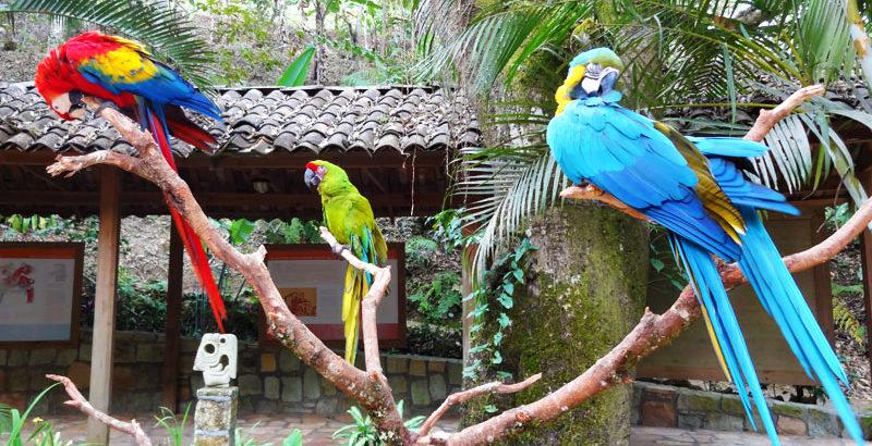 bird_park